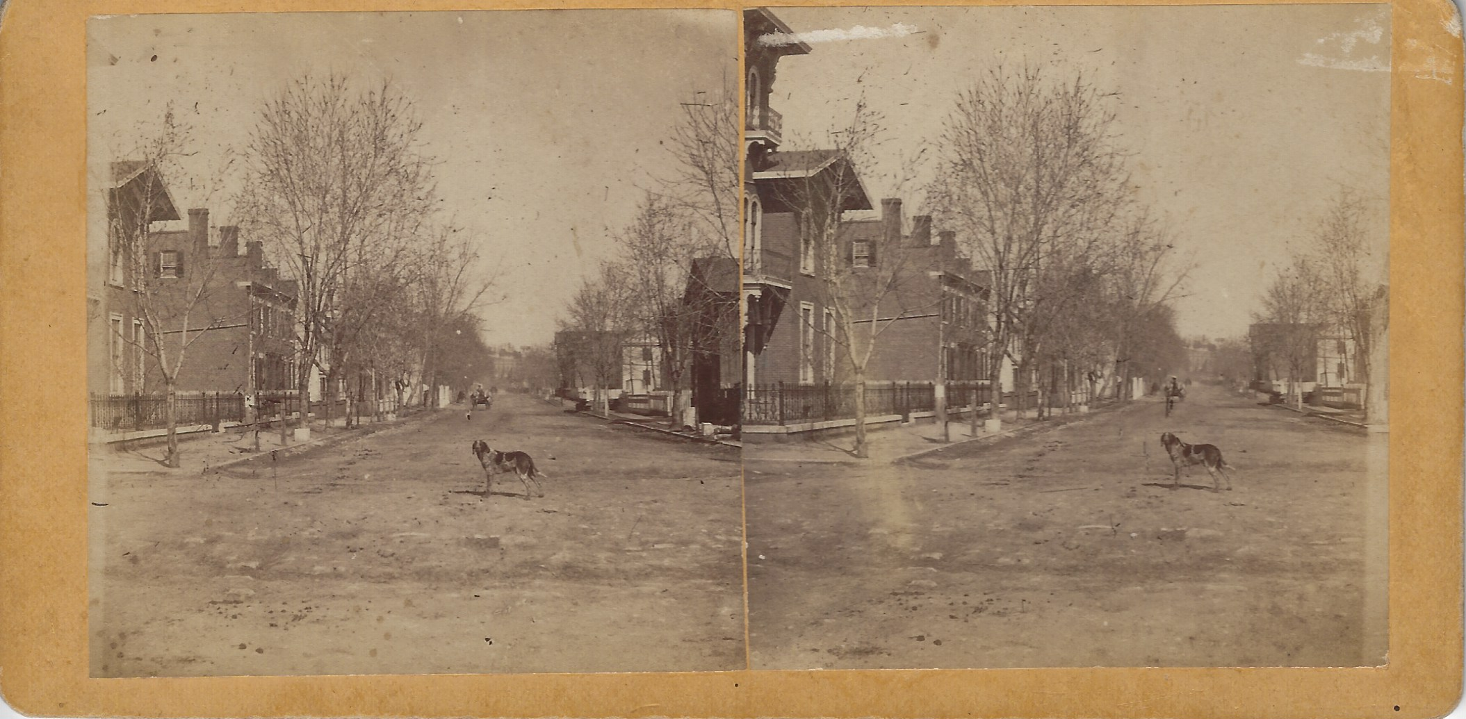 LJTP 100.297 - S. Root - Dean the Dog in Street - c1875